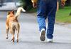 В Роверето придумали, как научить хозяев убирать за собаками