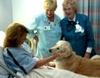 В Эмилии-Романье животным разрешили навещать своих хозяев в больнице