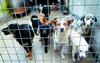 В провинции Витербо собак из приюта будут отдавать вместе с «приданым»
