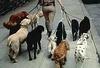 На Капри вычислять собачек, нагадивших на улицах, будут с помощью ДНК