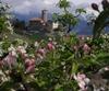 Трентино-Альто-Адидже приглашает туристов на цветение яблоневых садов