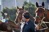 В Вероне открылась международная конная ярмарка