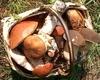 В Италии прогнозируют рекордный сбор грибов