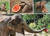 На Феррагосто животных биопарка Рима угостят арбузами