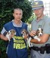 Новое место жительства получат первые освобожденные щенки бигль