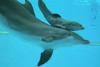 Гардаланд прекращает выступления дельфинов
