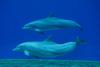 В аквариуме Генуи открывается новый павильон для дельфинов