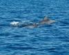 Самка дельфина с детенышем стали символом кампании опеки над дельфинами