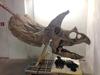 Коллекция динозавров Тркенто пополнилась новыми экспонатами
