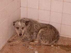 В Италии принято судебное решение, по которому те, кто плохо обращается с собако