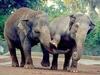 В Риме отпразднуют 40-летие слонихи Софии из Биопарка