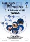 С 3 по 4 сентября в Турине пройдет международная выставка кошек