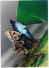 В Риме появился парк бабочек