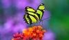 Тропические бабочки в Милане