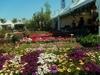 В Пескаре пройдет крупнейшая в Италии выставка цветов