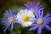 Италия отмечает Международный День растений