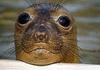 Тюлени-монахи возвращаются в Портофино: первые наблюдение за последние 84 года