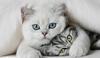 Кошки – самые любимые домашние животные итальянцев