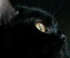 В Италии отмечают День черных кошек