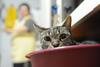 Итальянские собаки и кошки страдают от избыточного веса