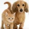 В Италии в течении всего марта месяца будут проводиться бесплатные ветеринарные