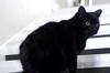 В Италии монахиня попала в аварию, чтобы избежать встречи с черным котом, перехо