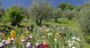 Во Флоренции открывается прекрасный Сад Ирисов