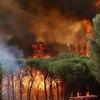 Пожары, итальянское первенство в Европе: уже сгорели 103 тысячи гектаров