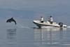 шоу дельфинов в Ионическом море