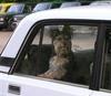 Штраф в 1000 евро за оставленную собаку в машине