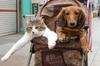 Новая модная тенденция в Италии: коляски для собак и кошек