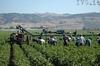 В Италии подписан декрет, предусматривающий въезд 60 тысяч сезонных рабочих-имми