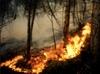 В Италии полыхают лесные пожары