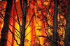 За один день на территории Италии случилось 155 лесных пожаров, в Гроссето задер