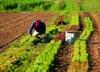 8.000 евро за оформление фиктивного трудового договора: 18 арестов в провинции С