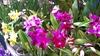 Варезе: в городе завершилась великолепная выставка орхидей