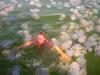 В Италии появятся сети, защищающие туристов от медуз