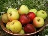 В музеях Альто-Адидже посетителям предложат свежие яблоки