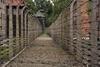 В Италии отмечается день памяти жертв Холокоста