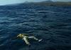 За два месяца в Средиземном поре пропало без вести 1500 человек