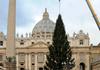 На площади Святого Петра в Риме установлена главная елка Италии