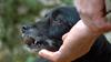 Охота за трюфелями в лесах около Норчиа