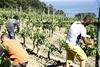 В итальянских колониях для несовершеннолетних заключенных учат разводить огород