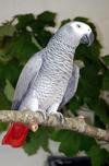 Cлужба спасения приехала на призывы о помощи, исходившие от попугая