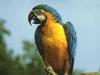 В Генуе попугай-охранник обратил вора в бегство