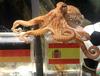Известный осьминог-предсказатель Пауль родом из Италии