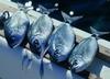 С 1 августа в Италии введен полный запрет на рыбную ловлю в Адриатическом море