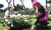 Цвета и ароматы: в Риме наградили самую красивую розу в мире