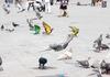 Защитникам животных не понравилось появление в Венеции разноцветных голубей