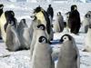 Пингвины в Риме: в поддержку Протокола Киото